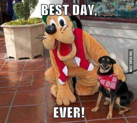 pluto_dog_best_DAy_Ever