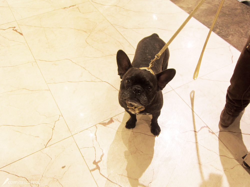 sarar, düsseldorf, cute dog, süßester hund von düsseldorf, knuffig, wuff wuff, hundi, dog, hund