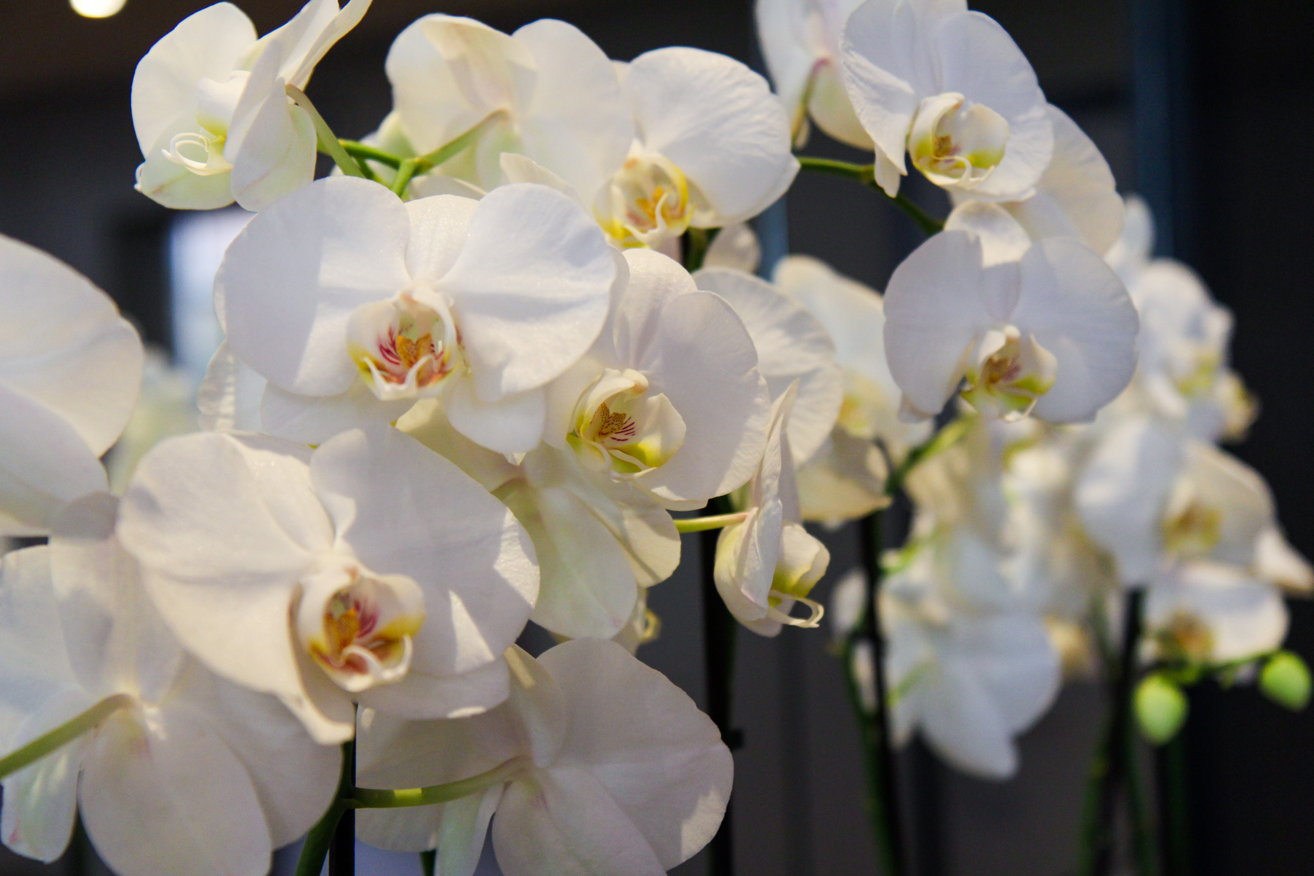 travel, brussels, brüssel, belgien, hotel, the dominican, hotelzimmer, orchids